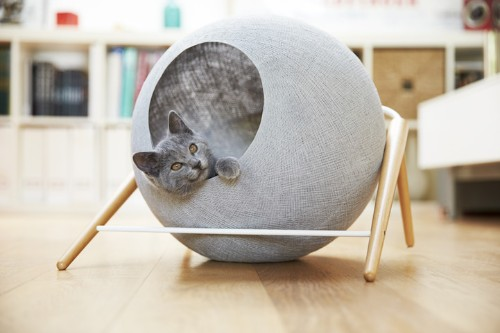 Elegant Cat Furniture Purrfectly Complements a Contemporary Interior
