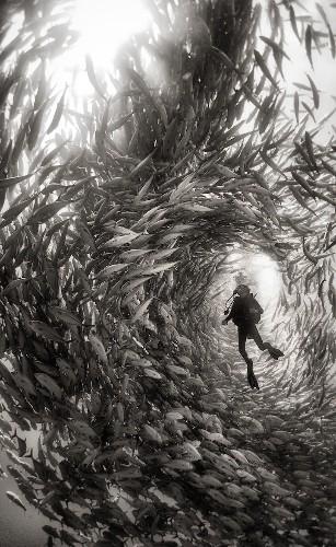 Interview: Exploring the Ocean Depths with NatGeo Traveler Photo Contest Winner Anuar Patjane Floriuk