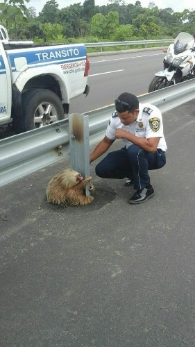 Adorable Sloth Stuck on Busy Highway is Rescued by Local Cops