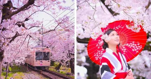 Photographer Captures the Magical Beginnings of Japan's Cherry Blossom Season