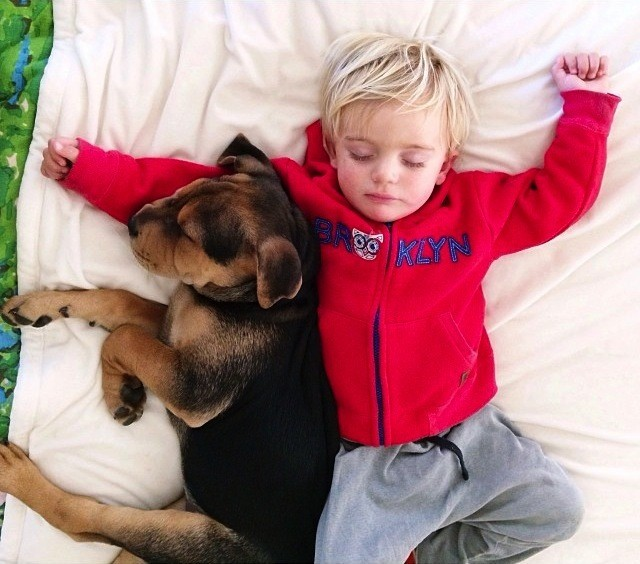 Adorable Toddler and His Puppy Continue Napping Together
