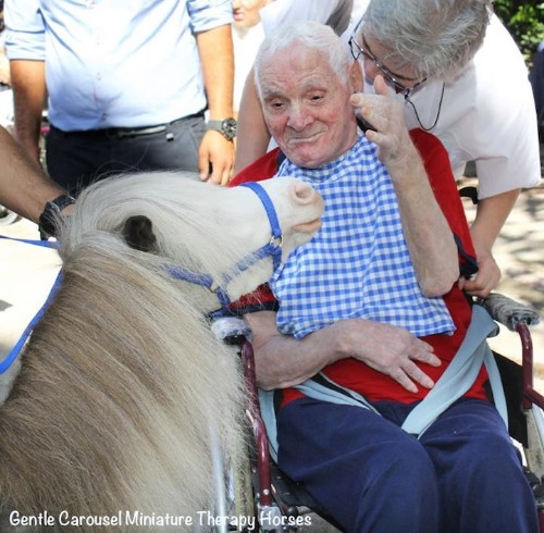 Adorable Miniature Horses Provide Therapeutic Benefits for People in Need