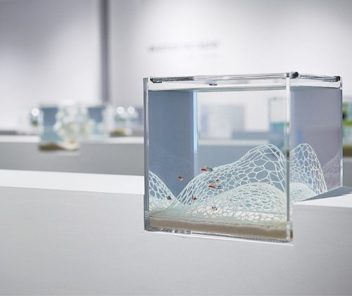 Modern 3D-Printed Aquariums Seamlessly Combine Nature and Art
