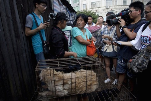 Inspiring Chinese Woman Travels 1,500 Miles to Rescue 100 Dogs from a Dog-Meat Festival