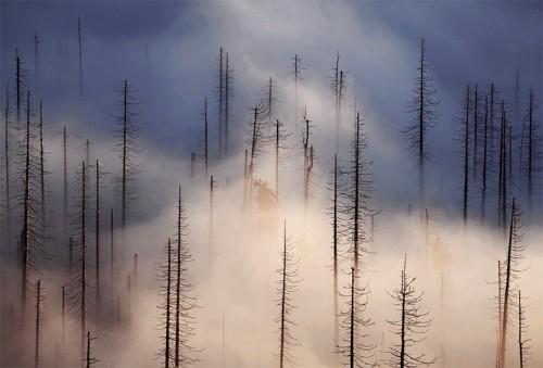 "Strolling Through Czech Republic's Gorgeous ""Cloud Forest"""