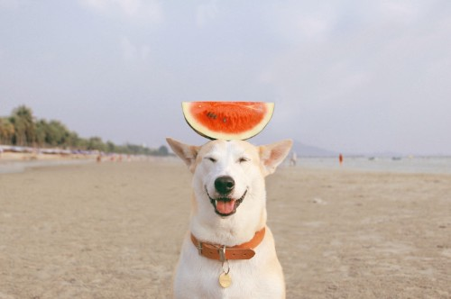 Meet Gluta, the Happy Rescue Dog Whose Bright Face Will Make You Smile