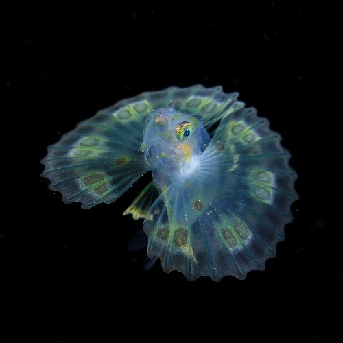 Underwater Photographer Spends 20 Years Capturing Photos of Microscopic Plankton