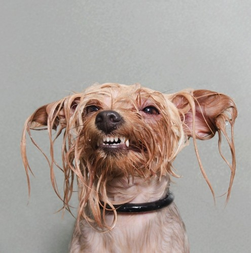 Funny Portraits of Wet Dogs by Sophie Gamand