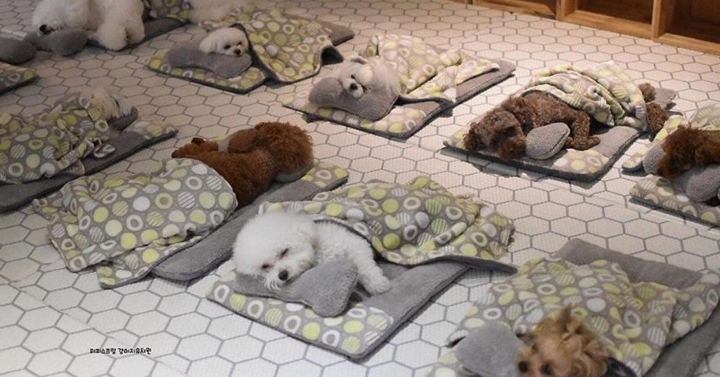 Puppy Day Care in South Korea Snaps the Most Adorable Photos of Tiny Doggos Napping
