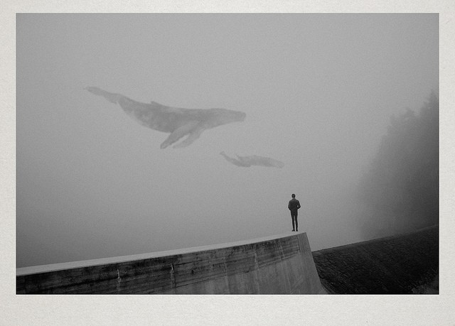 Dreamy Photos of Solitary Figures in Foggy Landscapes