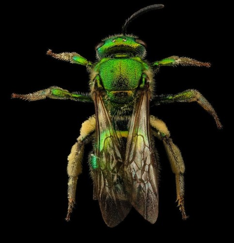 New Fascinating Macro Photos of Bees by the United States Geological Survey