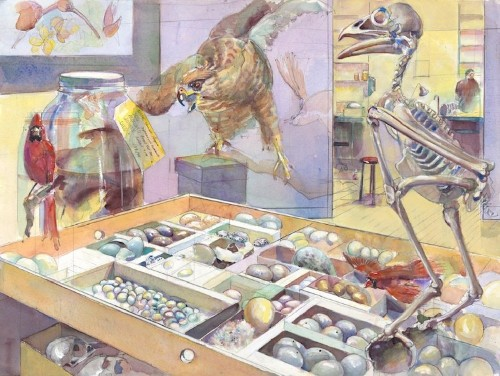 Interview: Museum's Artist-in-Residence Promotes Conservation with Wildlife Watercolors