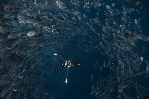 Interview: Breathtaking Images of Underwater Life Captured by Freediving Photographers