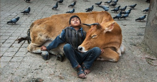 Interview: Steve McCurry Captures How Humans Connect with Animals Around the World