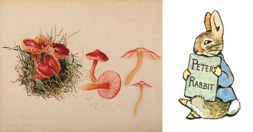 The Art of Beatrix Potter: From Scientific Studies to Beloved Children's Books