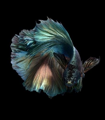 Expressive Marine Life Portraits Capture Fantastic Range of Fishy Personalities