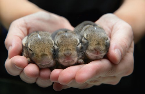 Adorable Photos of Newborn Animals in Wildlife Rehab Centers by Traer Scott