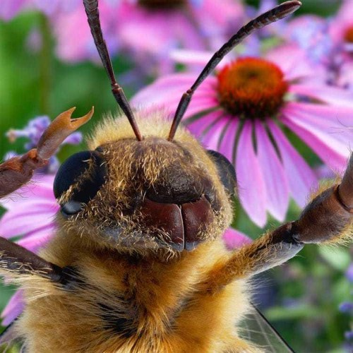 World's First Bee Influencer Uses Social Media to Help Save the Bees