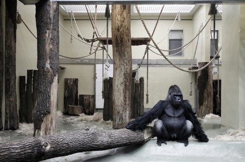 Heartbreaking Photos of Animals Stuck in Zoos