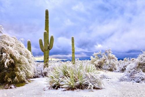 Rare Snowfall in Arizona Transforms Rocky Desert into Surreal Winter Wonderland