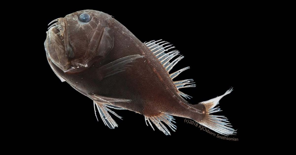 """Scientists Discover Deep-Sea """"Vantablack"""" Fish That Absorb Over 99% of Light"""