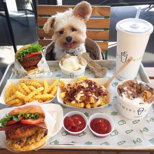 Stray Dog Turns Foodie at Pet Friendly Restaurants