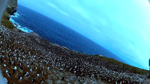 Incredible Aerial Footage of Penguins Taken by a Falcon