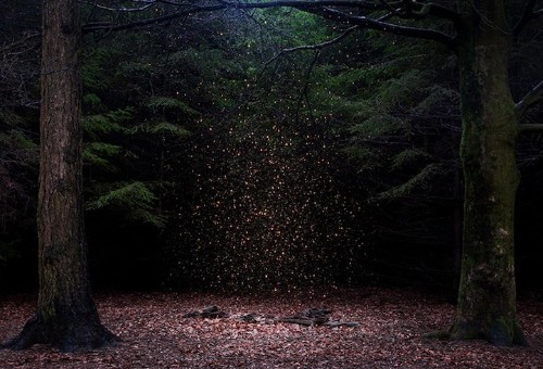 Mystical Photos of Illuminated Forests in the UK by Ellie Davies