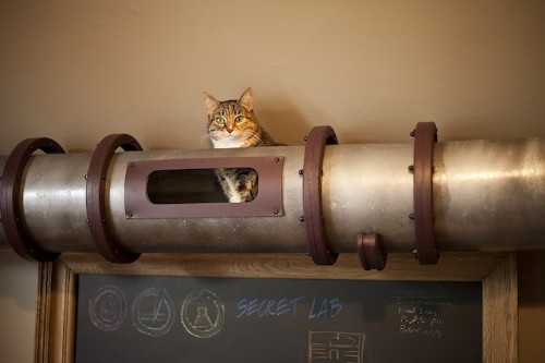 Innovative Cat Transit System Designed for the Home Office