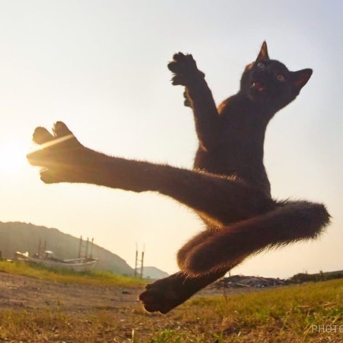 Photographer Captures Agile Felines Performing Like Ninja Cats