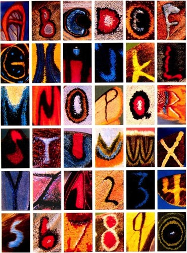 Entire Alphabet Found on the Wing Patterns of Butterflies