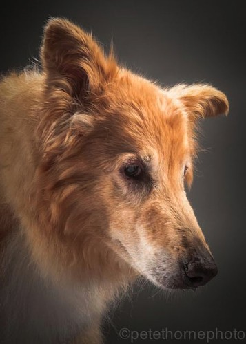 Portrait Series Captures the Charming Personality of Very, Very Old Dogs