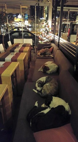 Caf Opens Its Doors Every Night for Stray Dogs to Have a Warm Place to Sleep