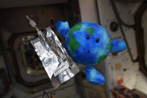 "ISS Astronauts Adopt Adorable ""Earthy"" Toy as Their Next Recruit"