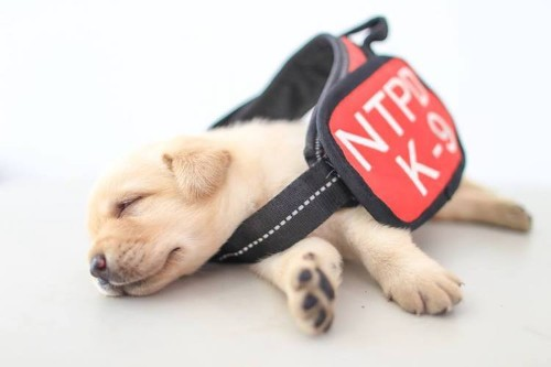 Puppy Police Dog Photo Shoot Showcases the Cutest Boys on the Squad