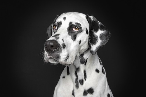 Portraits of Dogs With Human-Like Expressions