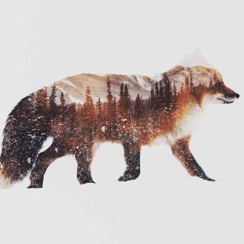 Double Exposure Photos Capture the Essence of Animals in Arctic Landscapes