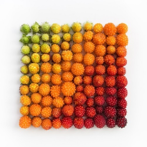 Visually Satisfying Arrangements of Everyday Objects by Emily Blincoe