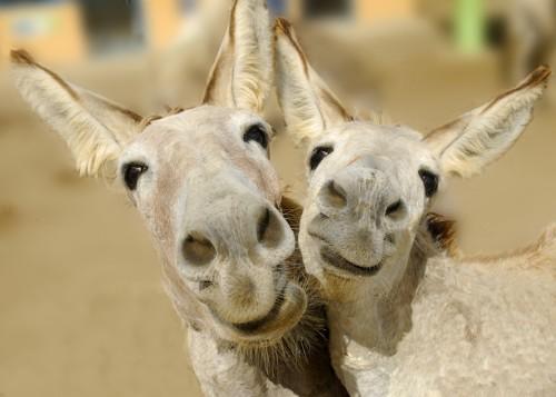 Adorable Photos of Little Donkeys That Break Their Stubborn Stereotypes