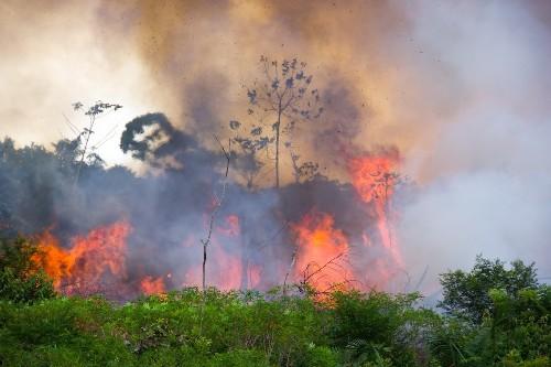 La Amazonía brasileña se está quemando a una velocidad alarmante