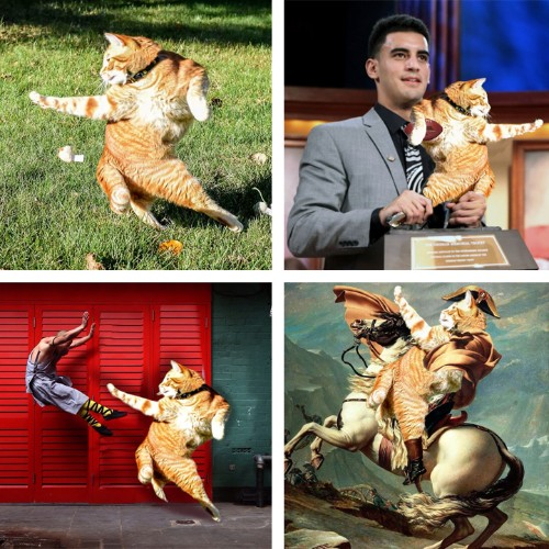 Redditors Reimagine Photo of a Flexible Cat in Hilarious Photoshop Battle