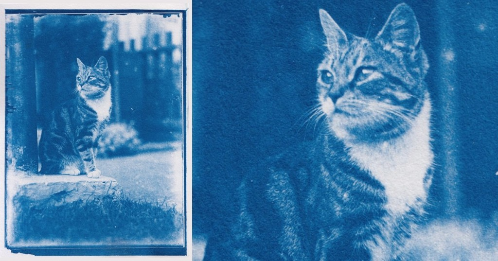 Photographer Finds 120-Year-Old Cat Photos After Developing Film Found in a Time Capsule