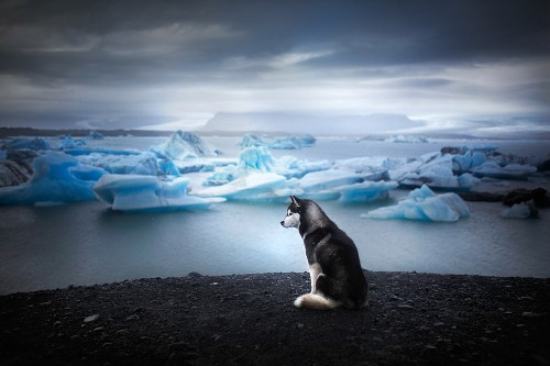 Soulful Portraits of Dogs Exploring the Desolate Beauty of Arctic Landscapes