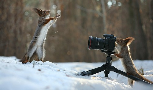 Two Adorable Squirrels Take Photos, Play Catch, and Build a Snowman