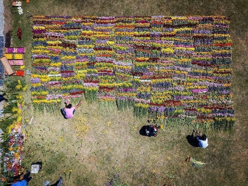 Japanese Artist Plants Colorful Flower Landscapes to Explore Nature's Cycle of Life and Death