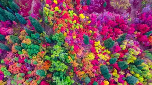 Breathtaking Drone Footage Captures the Vibrant Colors of Utah in Fall