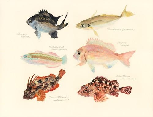 Japanese Artist Creates Delicate Watercolor Paintings of Fish Every Week