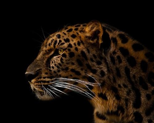 Intimate Animal Portraits by Joshua Arlington