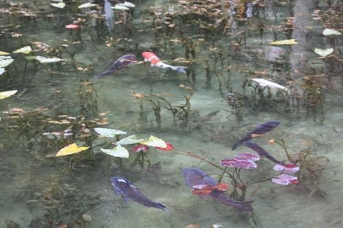 El estanque de Monet en Japón luce como una pintura viva