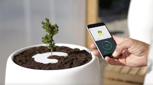 Smart Biodegradable Urn Uses Loved Ones' Ashes to Grow a Tree